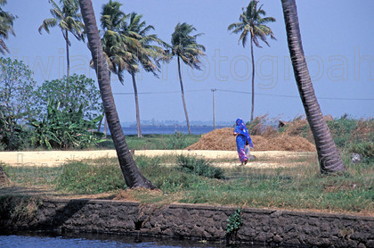 india 270 