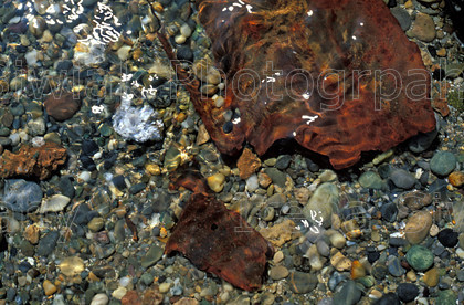 textures 17 