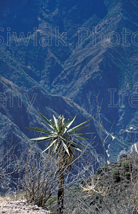 mexico2 66 