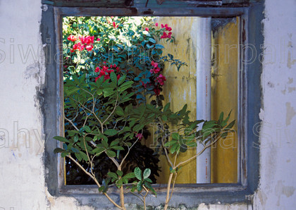 mexico 486 