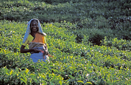 india2 04 